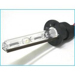 Lampada Xenon H1 5000K 35W